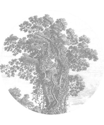 Tapeta Circle Engraved Tree, KEK Amsterdam